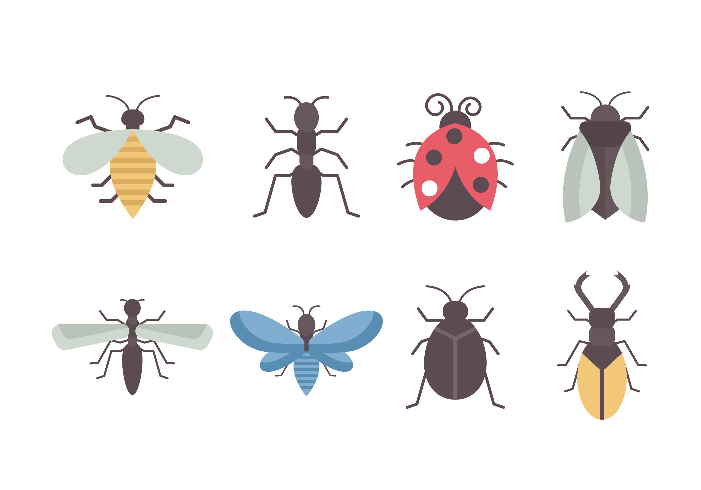 كيفية القضاء على حشرات البق الدقيقي