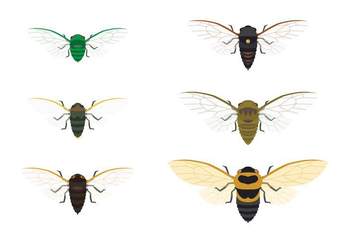 Cicada Family Vector