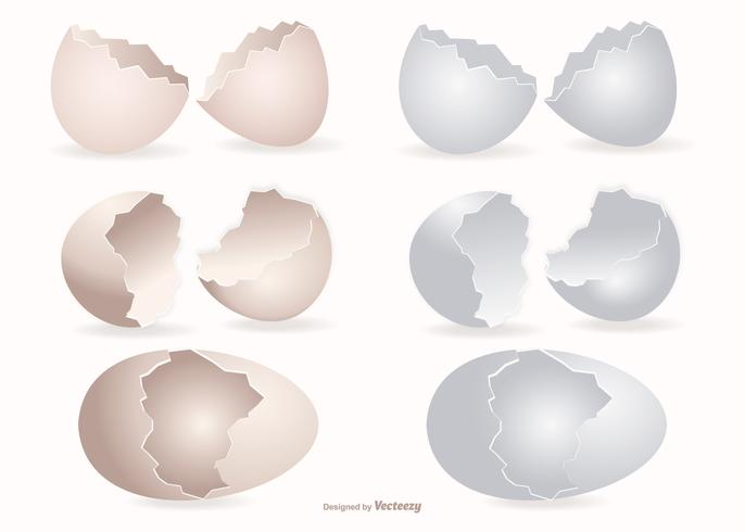 Coleção de cascas de ovos quebrados