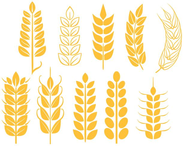 Free Wheat Vectors