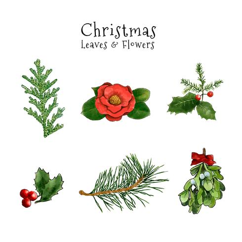 Cute Christmas Leaves And Flowers Collection