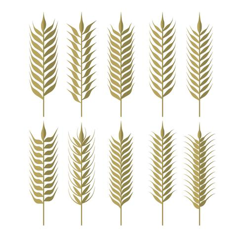 Simple Wheat Ears Clipart