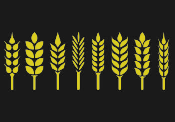 Set Of Wheat Ears Icon
