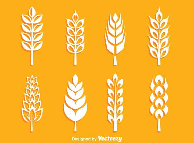 White Wheat Ears Collection Vector