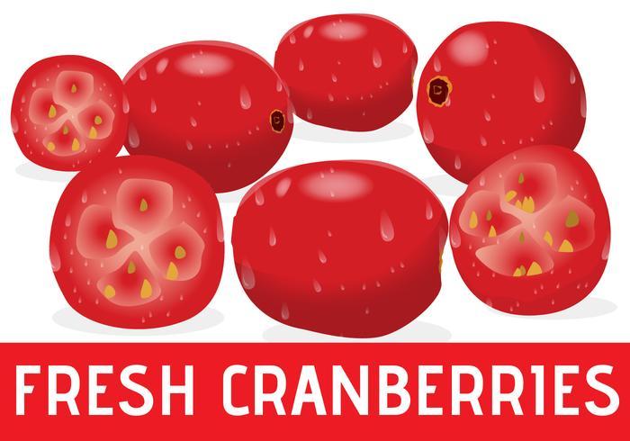 Realistic Fresh Cranberries