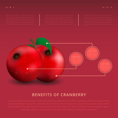 Benefits of Cranberries Infographic Template