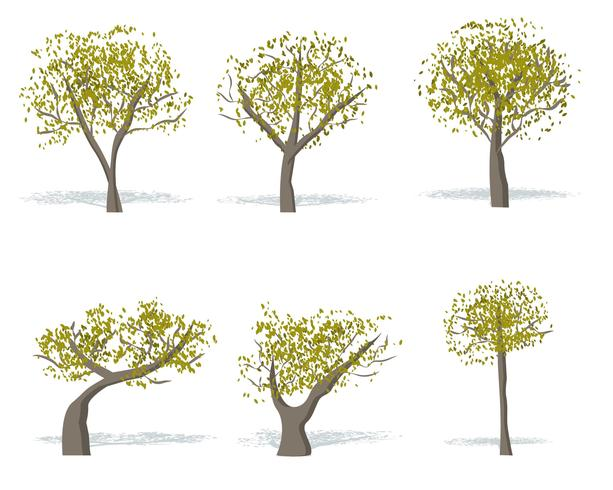 Gum Tree Vector gratuito