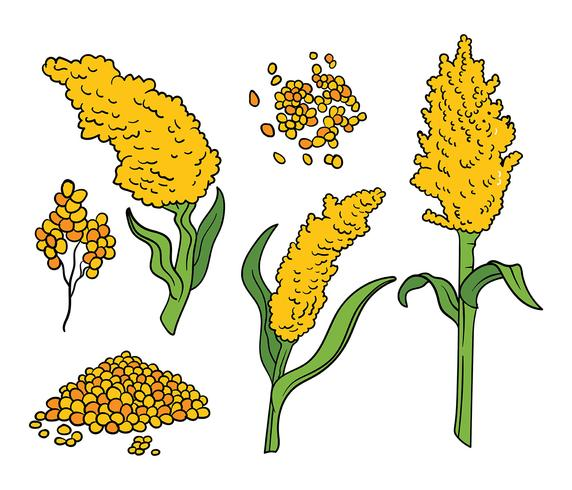 Sorghum Vector Icons