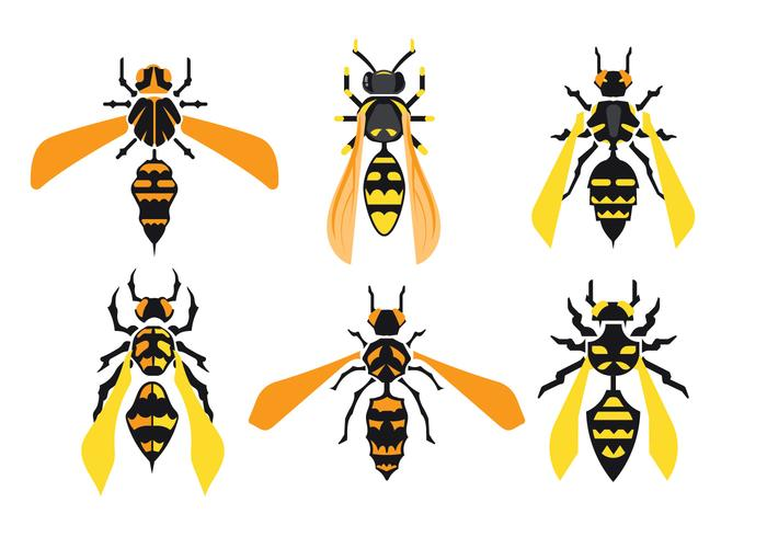 Set of Giant Hornets Isolated on White Background