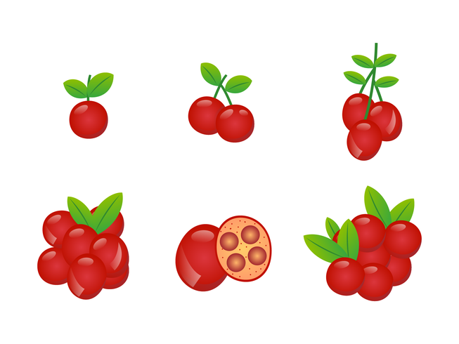 Realistic Red Cranberries Vector