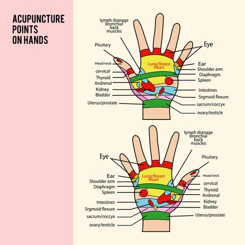 Acupuncture Point on Hands Vector