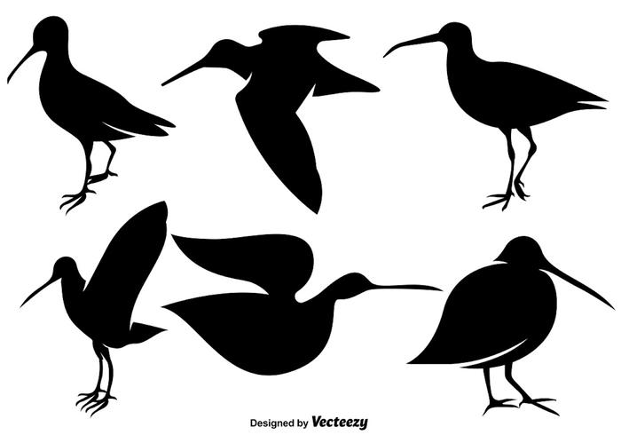 Vector iconos planos de aves snipe