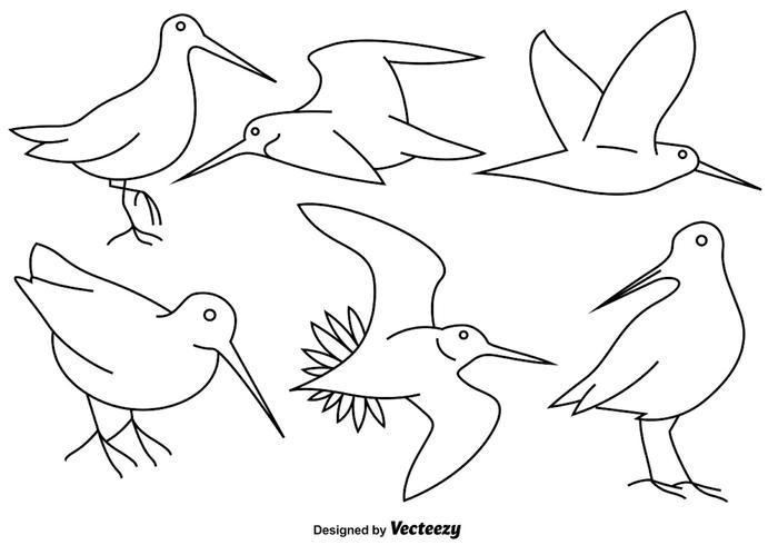 Vector Snipe Bird Line Icons