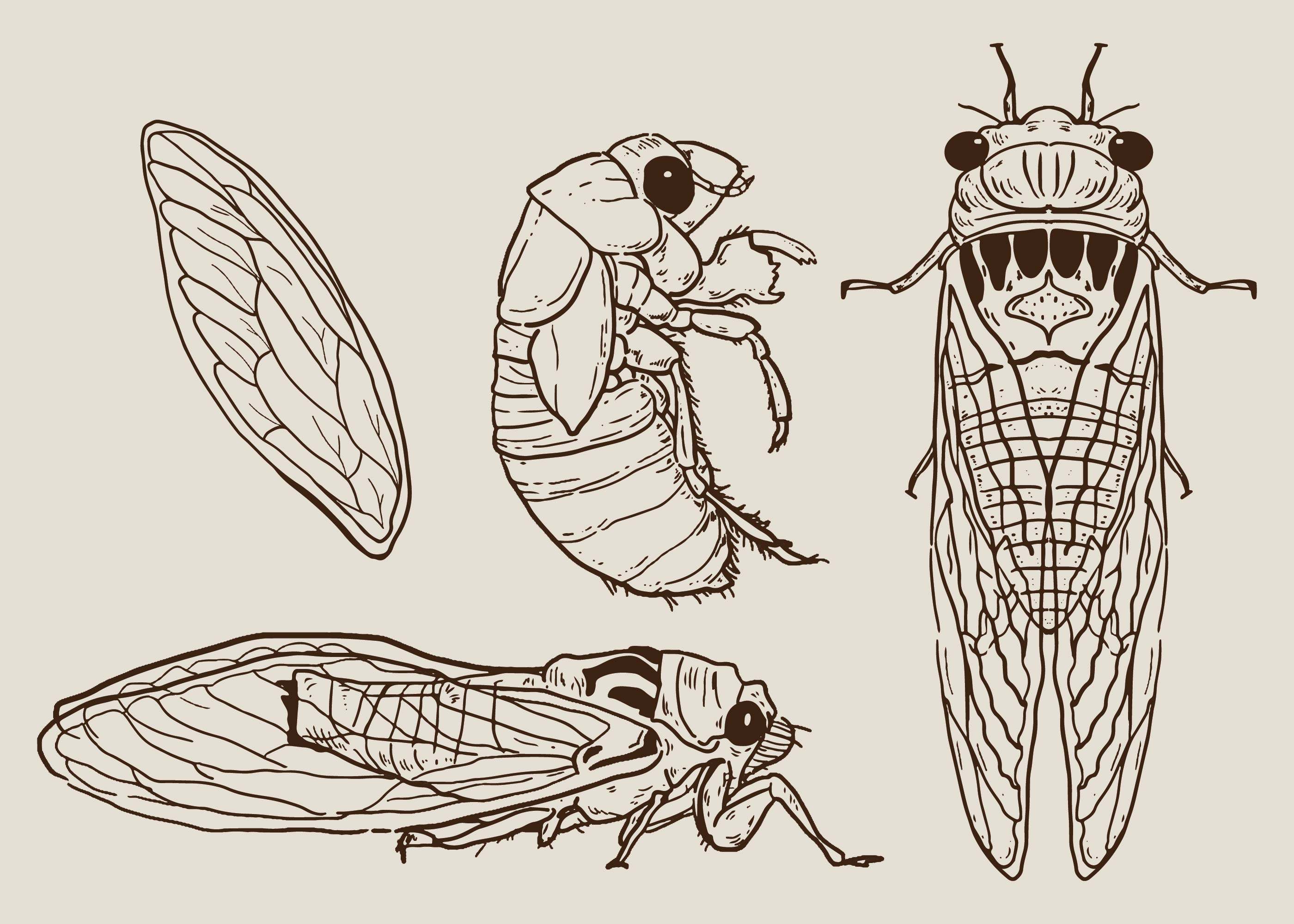 Cicada Set Hand...