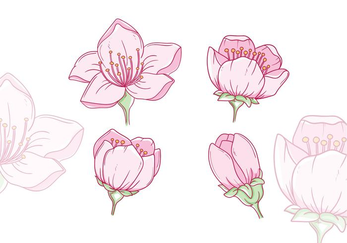 Hand Drawn Plum Blossom Vectors