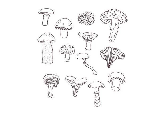 Desenhos Botânicos de Cogumelos