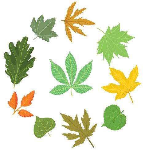 Vetores de folhas diferentes