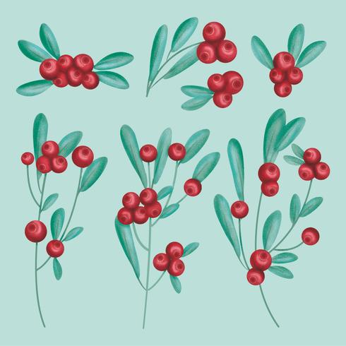 Vector Hand Drawn Cranberries