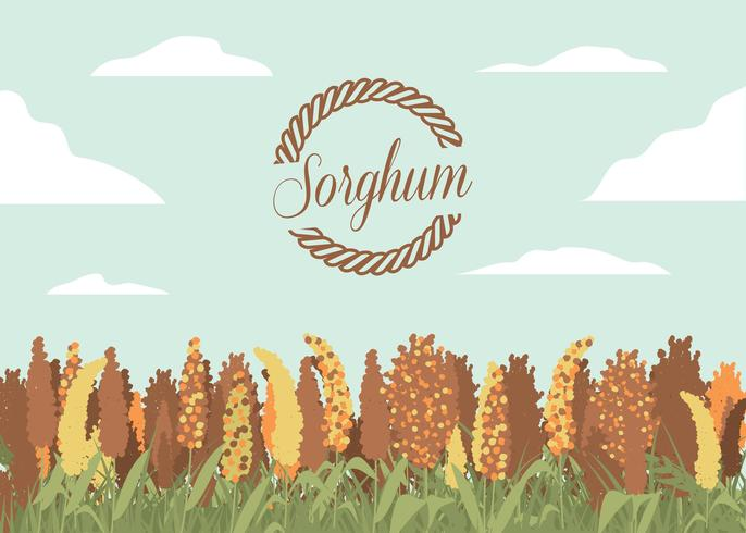 Sorghum-Feld-Illustrations-Vektor