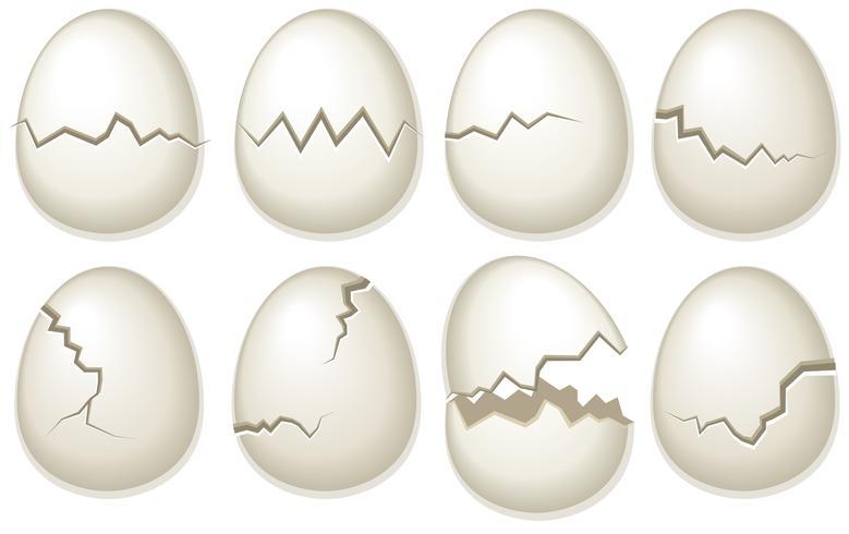 vektor uppsättning brutna äggskal