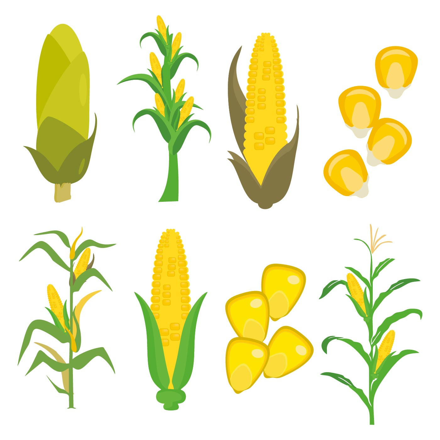 free corn stalks and corns vector download free vector