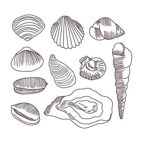 Detailed Doodles Of Shells