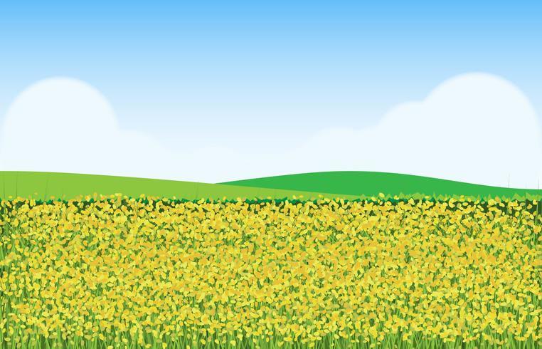 Senap blommor i fält illustration