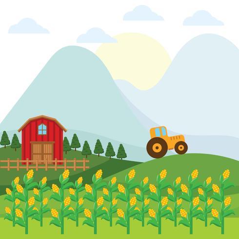 Corn Stalks Farm Background vector