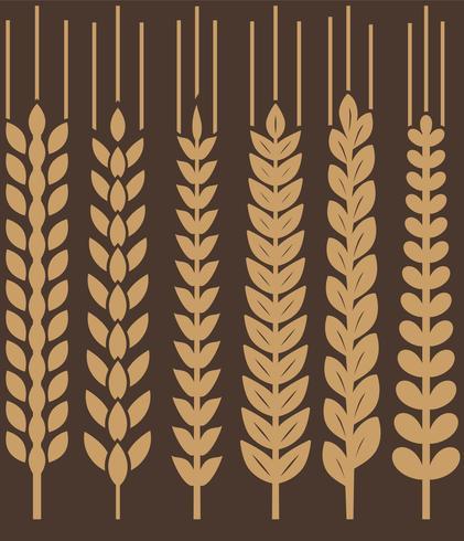 Conjunto de ícones de brincos de trigo do vetor
