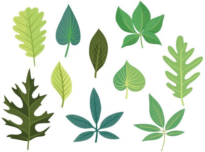 Vetores grátis de folhas verdes