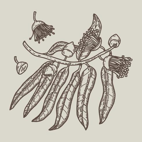 Vecteur de gomme arbre dessinés à la main
