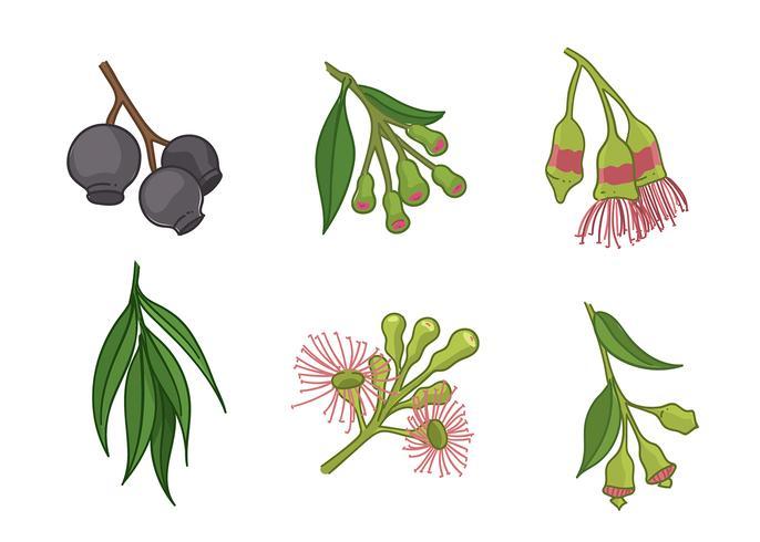 Vector libre de la flor del árbol de la goma