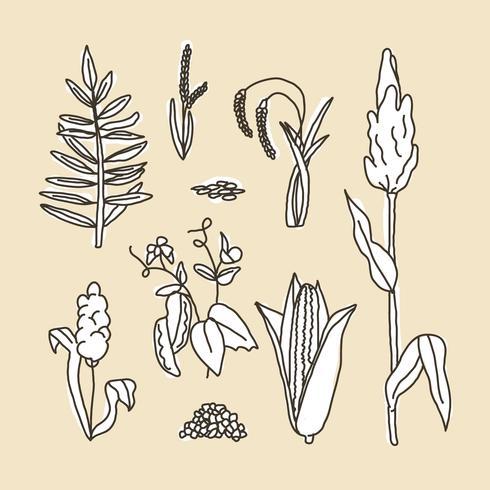 Set Of Sorghum Doodles