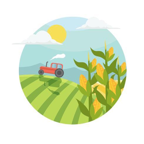 Stocchi di mais nell'illustrazione del campo