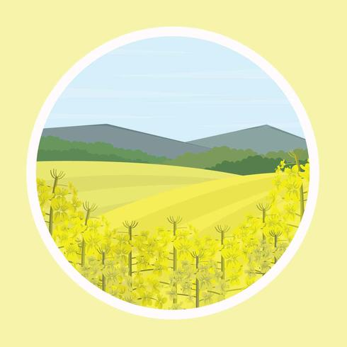 Free Canola Flower Illustration