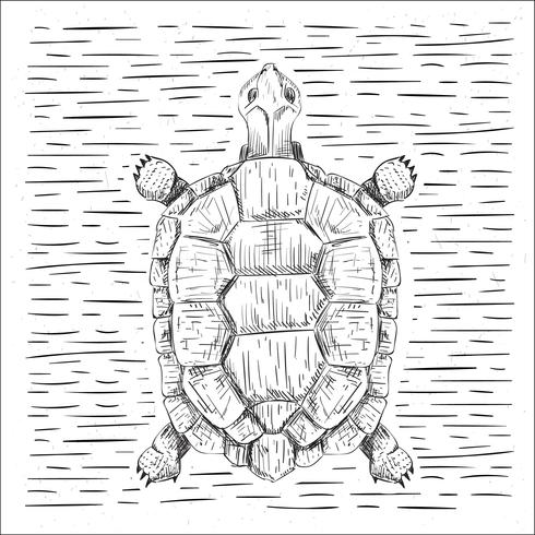 Free Hand Drawn Vector Turtle Illustration