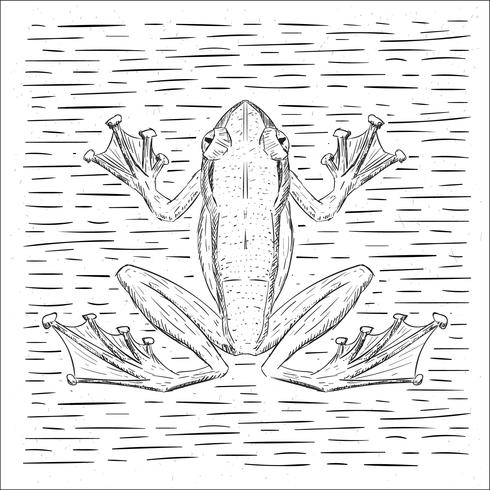 Free Hand Drawn Vector Frog Illustration