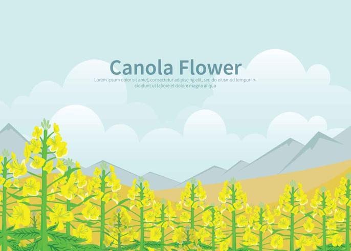 Kostenlose Canola-Blumen-Illustration