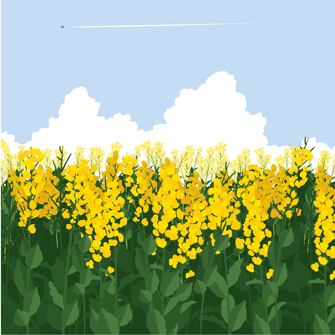 Canola Field Sky Free Vector Download Free Vector Art