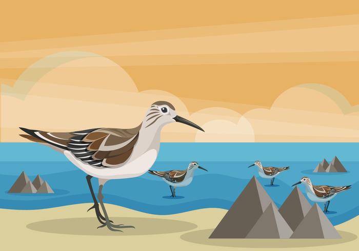 Snipe Bird on Beach Vector Illustration