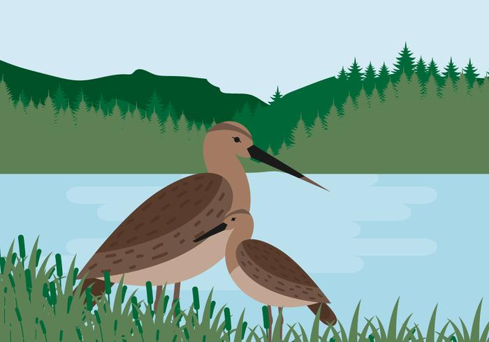 Snipe Bird Vector