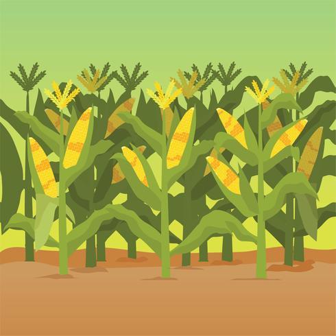 Illustration de tiges de maïs