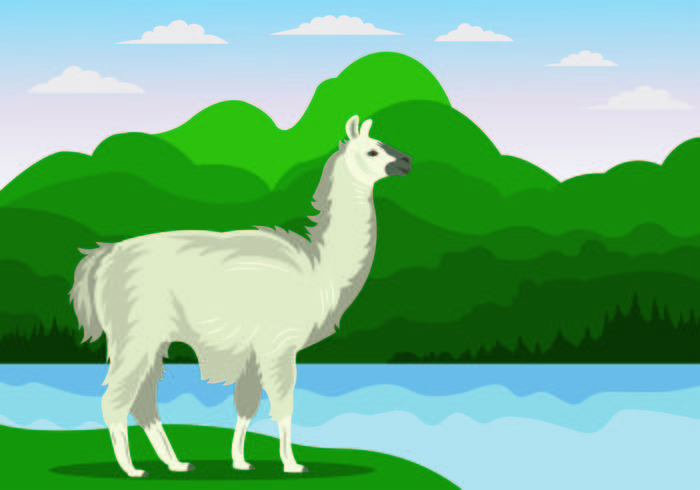 Vector illustratie van Lama