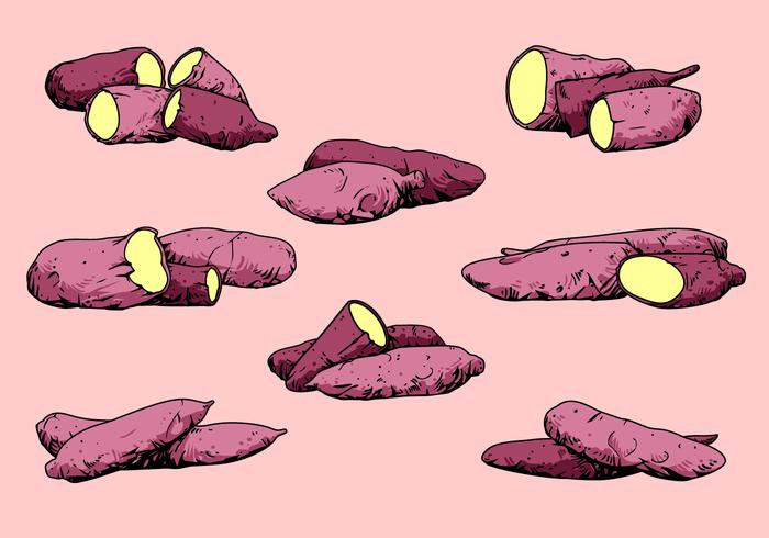 Purple Cassava Yam Free Vector