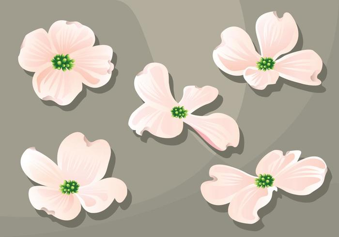 Dogwood Vector Pack