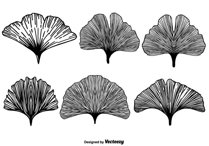Vector Gingkos Collection
