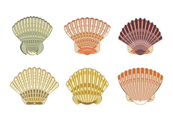 Set van Sint-jakobsschelpen shell Illustratie geïsoleerd op een witte achtergrond