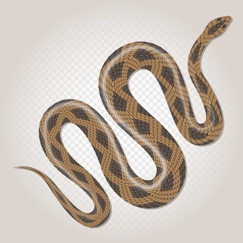 Serpente tropicale del pitone marrone sull'illustrazione trasparente del fondo