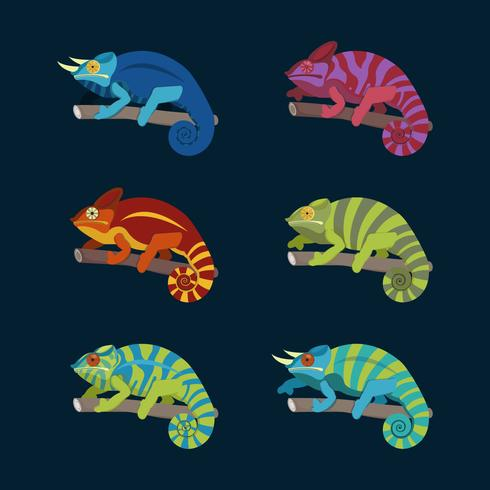 Colorful Chameleon Collection Vector Illustration