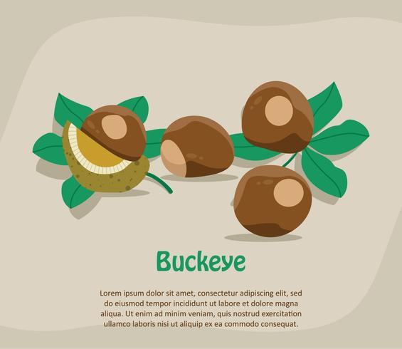 Buckeye Illustration